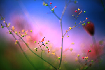 Colourful little butterfly