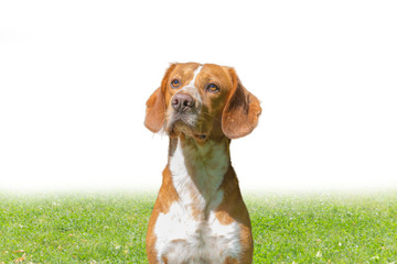 Hund auf Spielwiese