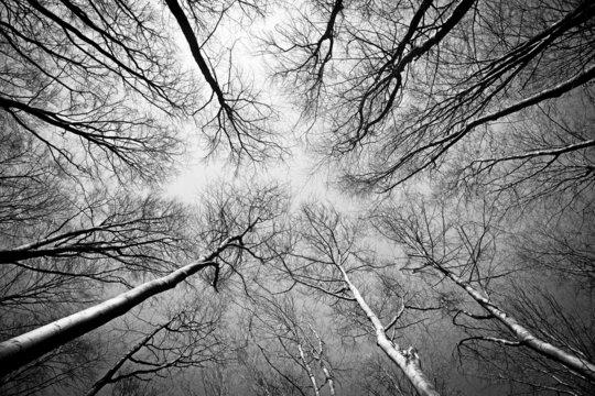 Wald im Herbst schwarzweiss