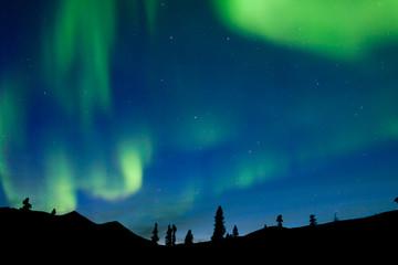 Dancing northern lights spruce taiga Yukon Canada
