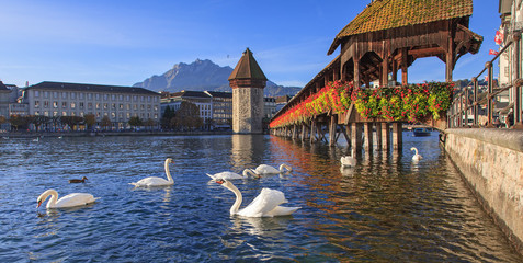 Foto op Aluminium Zwaan Lucerne, the Chapel Bridge in early morning
