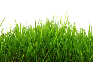 Grünes Gras freigestellt