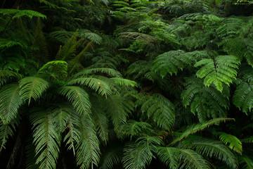 やんばるの森林・シダ植物