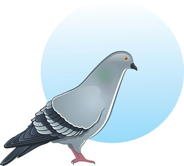 Cute vector pigeon illustration