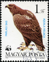 stamp printed in Hungary shows Eastern Imperial Eagle
