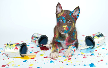 Fototapete - Painted Puppy