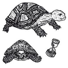 Tortoises Set