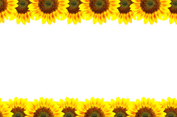 Sun-flower frame, art conception.