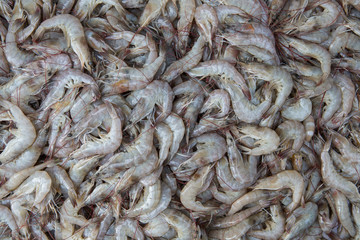 shrimp at a market