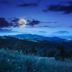 coniferous forest on a  hillside valley at night