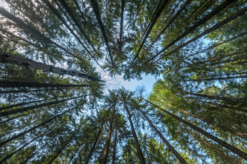 Las na tle błękitnego nieba