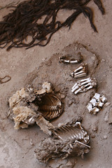 Ancient Human Bones