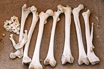 Ancient Human Bones - Femur and Jaw