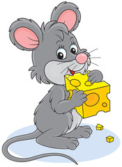 Little grey mouse gnawing a piece of cheese