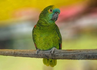 Green parrot on a branch, cut out