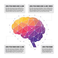Human Brain - Colored Polygon Infographic Illustration