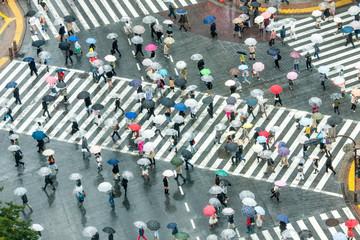 Fotomurales - Shibuya Crossing
