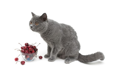 gray cat and ripe cherry on a white background