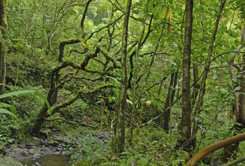 Forest Trail in Haleakala National Park, Hawaii, USA