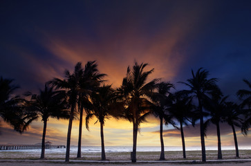 beautiful  twilight sky and dusky with silhouete coconut tree on