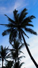 palm tree on sunset sky