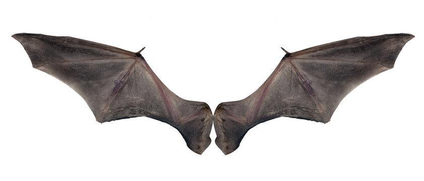 bat wings