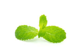 Fresh mint close up on white
