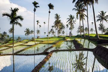 Rice fields, Senaru, Lombok, Indonesia, Southeast Asia, Asia