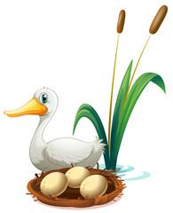 A duck beside the nest