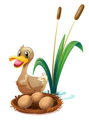 A brown duck near the nest