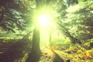 Papiers peints Jaune Sunny forest
