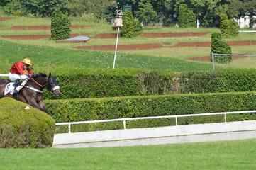 chevaux de courses