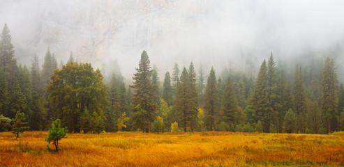 Yosemite Valley Scene with Fog Wall mural