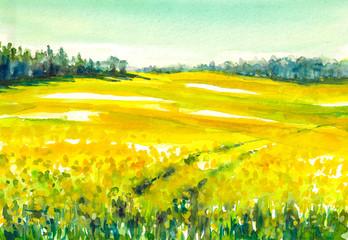 Rapeseed field.Watercolors