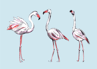 Hand colored drawing flamingos. Vector illustration
