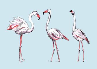 Hand colored drawing flamingos. Vector illustration
