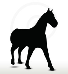 horse silhouette in walking position