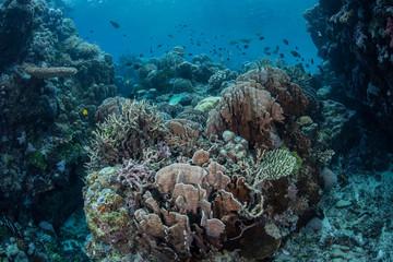 Diverse Coral Reef 8