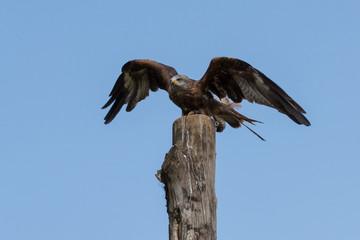 Fotoväggar - Wings of Freedom