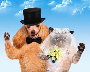 Cat and Dog. Wedding