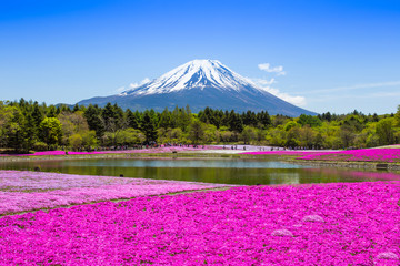 Fuji with pink moss garden Fototapete