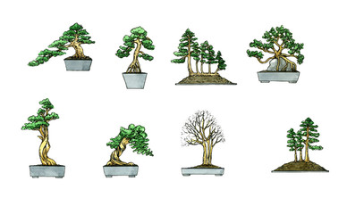 Bonsai. Botany