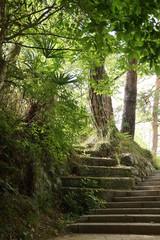 秘境天竜峡の遊歩道