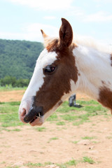 Picture of a cute little foal