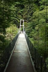 新緑の天竜峡とつつじ橋