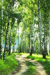 Obraz Droga przez las brzozowy - fototapety do salonu