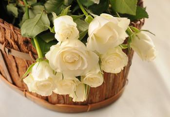 Fototapeta Białe róże w koszyku obraz