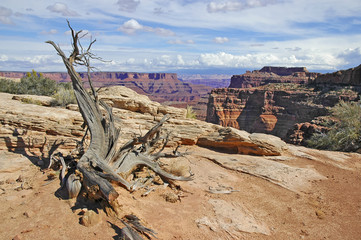 Southwest USA Desert Landscape