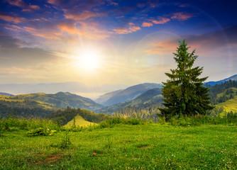 pine tree on hillside under cloudy sunset sky