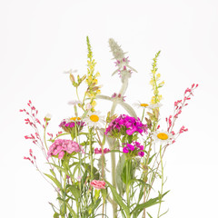 wildflowers with thin stems